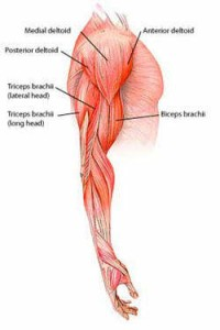 triceps oefeningen